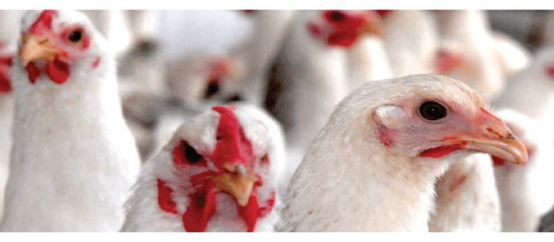 Poultry products in pune