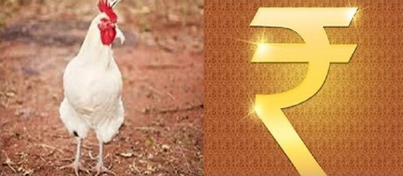 Solution-To-Economise-Cost-Of-Broiler-Production